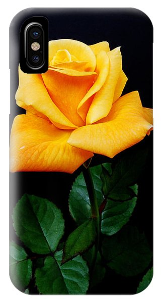 Deciduous iPhone Case - Yellow Rose by Michael Peychich