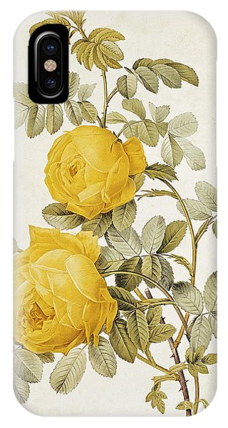Redoute iPhone Case - Yellow Rose by Pierre Joseph Redoute
