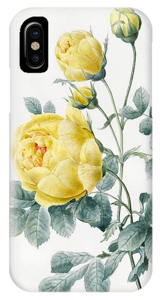 Flora iPhone Case - Yellow Roses by Louise D'Orleans