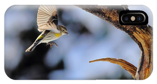 Yellow-rumped Warbler Landing IPhone Case