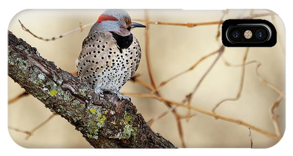 Northern Flicker iPhone Case - Yellow-shafted Northern Flicker by Betty LaRue