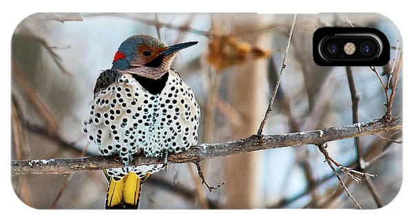 Yellow-shafted Northern Flicker Staying Warm IPhone Case