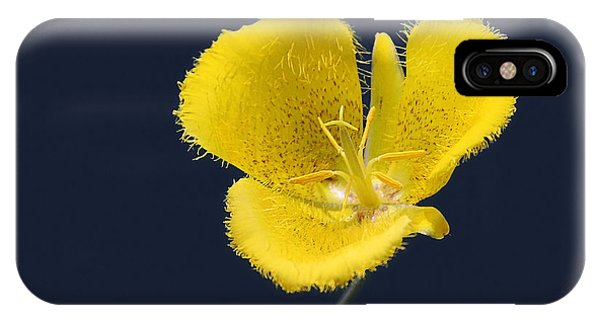 Ornamental iPhone Case - Yellow Star Tulip - Calochortus Monophyllus by Christine Till