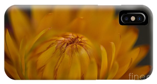 Yellow Strawflower Blossom Close-up IPhone Case