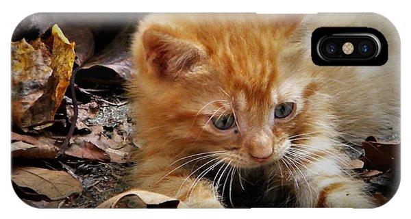 Yellow Tabby Kitten IPhone Case