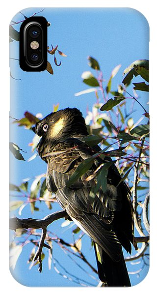 Yellow-tailed Black Cockatoo IPhone Case