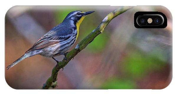 Warbler iPhone Case - Yellow-throated Warbler by Rick Berk