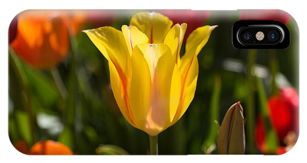 Yellow Tulip IPhone Case