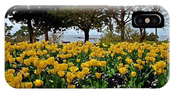 Yellow Tulips Of Fairhope Alabama IPhone Case