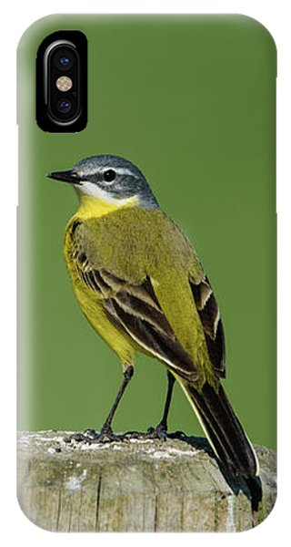 Yellow Wagtail Perching On The Roundpole IPhone Case