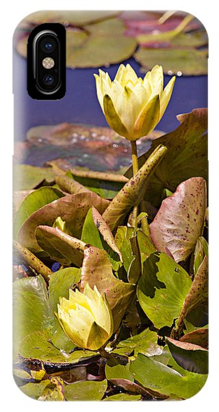 Yellow Water Hyacinth IPhone Case