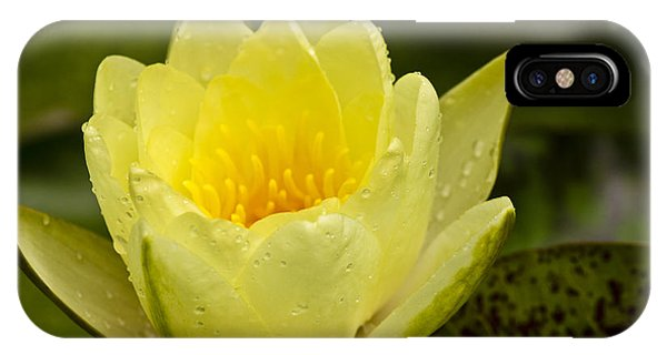 J Paul Getty iPhone Case - Yellow Water Lilly by Teresa Mucha