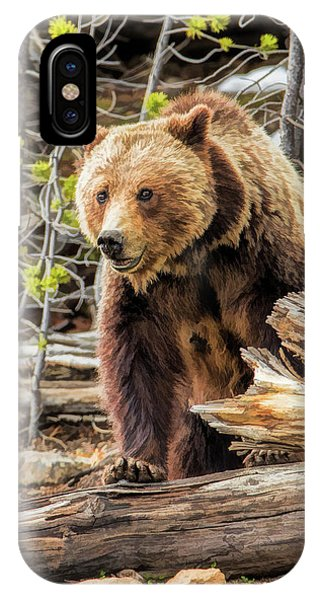IPhone Case featuring the painting Yellowstone Grizzly Bear by Christopher Arndt