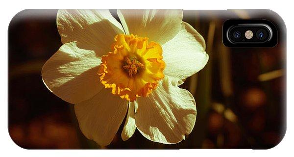 Yesteryear Daffodil IPhone Case