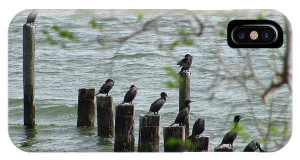 York River Cormorants IPhone Case