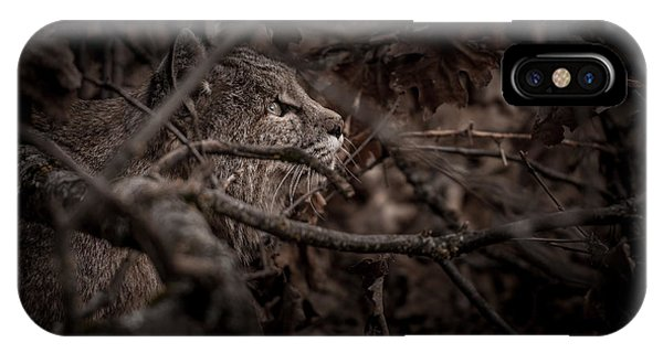 Bobcats iPhone Case - Yosemite Bobcat  by Ralph Vazquez
