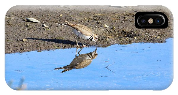 Killdeer iPhone Case - You Look Familiar  by Karen Silvestri