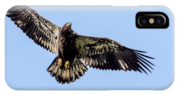 Young Bald Eagle Flight IPhone Case