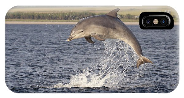 Young Bottlenose Dolphin - Scotland #13 IPhone Case