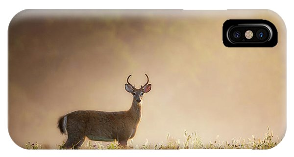 White Tailed Deer iPhone Case - Young Buck by Bill Wakeley