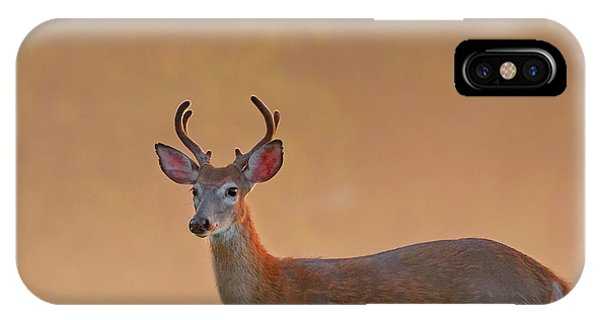 White Tailed Deer iPhone Case - Young Buck Square by Bill Wakeley