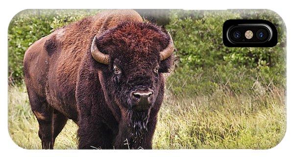 Young Buffalo IPhone Case
