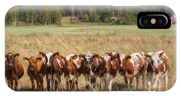 Salo iPhone Case - Young Calves On Pasture by Veikko Suikkanen