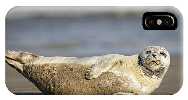 Young Common Seal Sleeping On The Beach IPhone Case