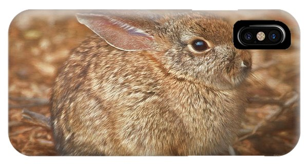 Young Cottontail In The Morning IPhone Case