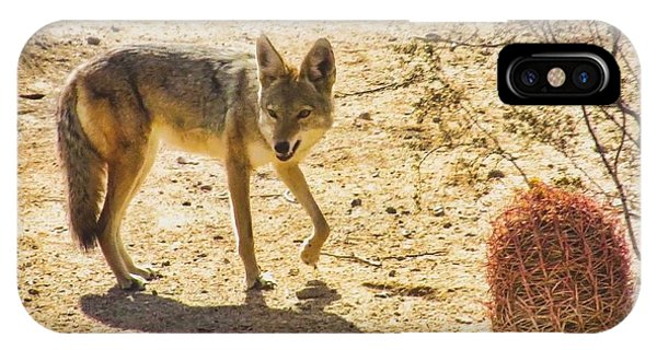 Young Coyote And Cactus IPhone Case