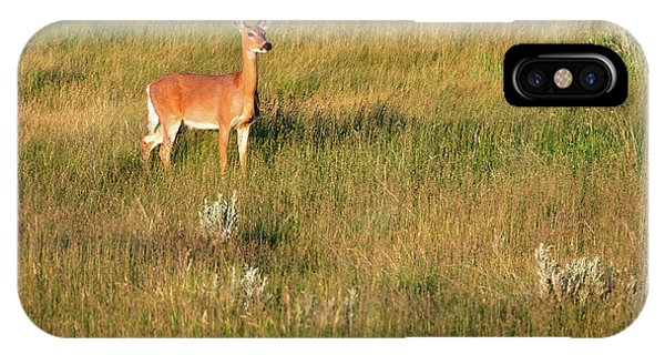 White Tailed Deer iPhone Case - Young Deer by Todd Klassy