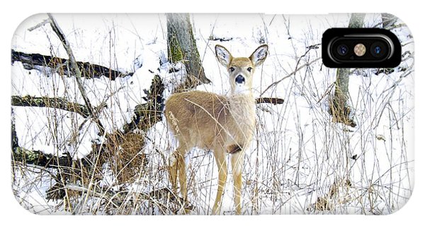 Young Doe And Spring Snow IPhone Case