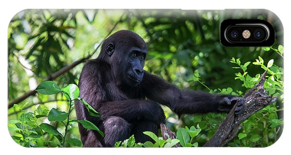 Young Gorilla IPhone Case