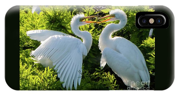 Young Great Egrets Playing IPhone Case