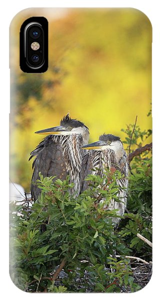 Young Herons IPhone Case
