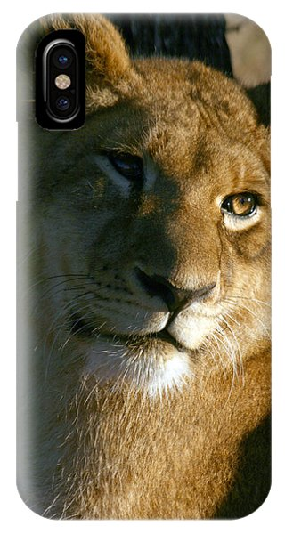 IPhone Case featuring the photograph Young Lion by Karen Zuk Rosenblatt