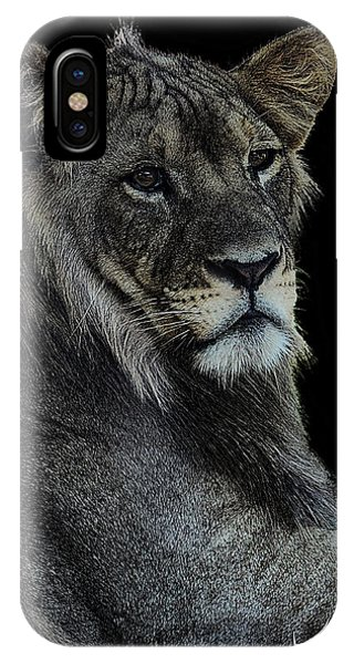 Young Lion Phone Case by Keith Lovejoy
