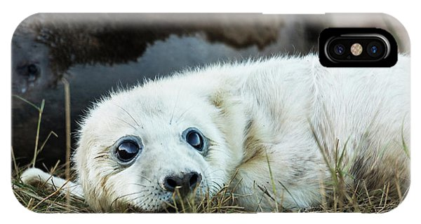 Young Pup IPhone Case