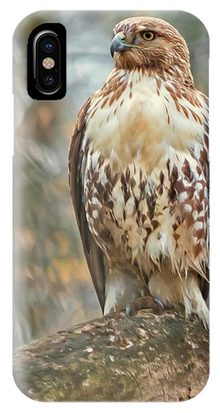 Young Red Tailed Hawk  IPhone Case