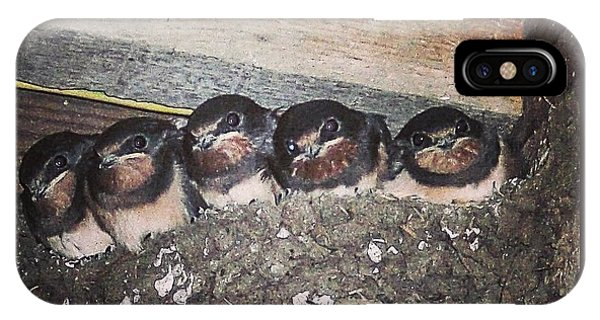 Young Swallows, Lancashire, England, Uk IPhone Case