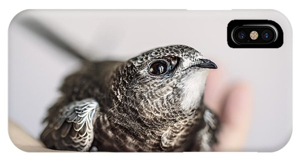 Martin iPhone Case - Young Swift by Nailia Schwarz