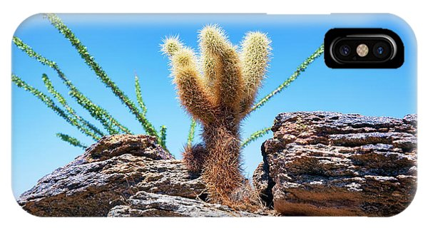 Teddy Bear Cholla iPhone Case - Young Teddy Bear Cholla by Kelley King