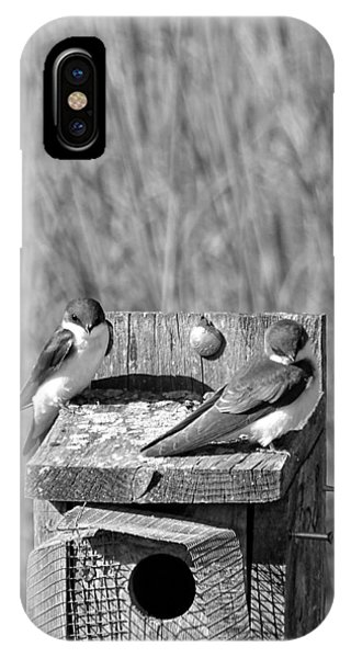 Young Tree Swallows IPhone Case