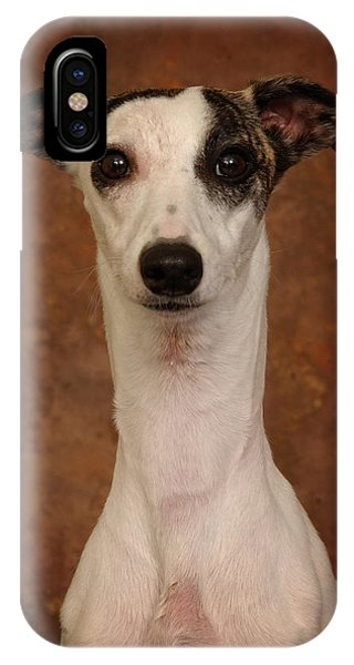 Young Whippet IPhone Case