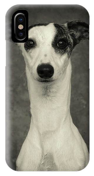 Young Whippet In Black And White IPhone Case