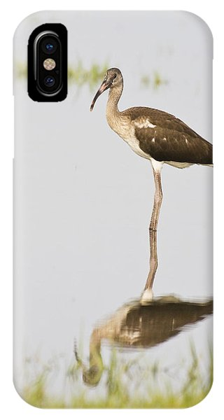 Young White Ibis IPhone Case
