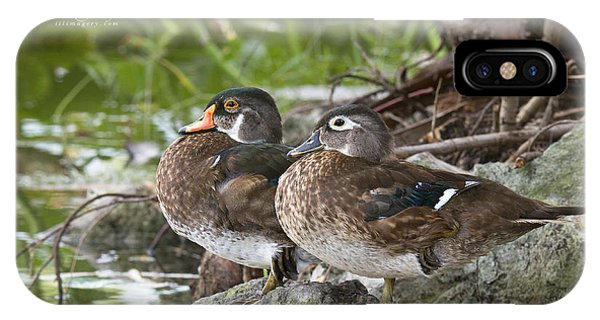 Young Wood Duck Pair IPhone Case