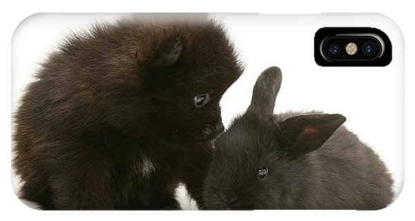 Pomeranian iPhone Case - You're Nearly As Black As Me by Warren Photographic