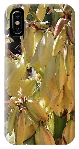 IPhone Case featuring the photograph Yucca Bloom II by Ron Cline