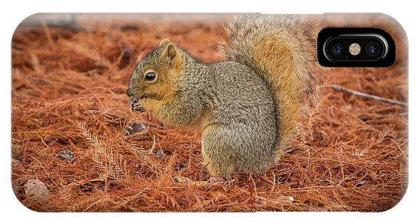 Yum Yum Nuts Wildlife Photography By Kaylyn Franks     IPhone Case
